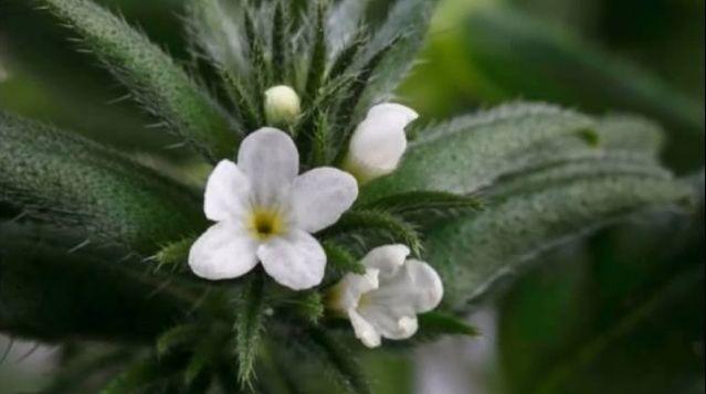 Planta viitorului a fost aprobata in UE: E plina de acizi grasi omega 3