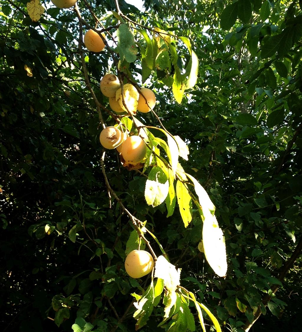 Comment nous mangeons correctement fruits pourquoi ne for Portent fruit