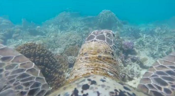 Imagini spectaculoase din ocean, prin ochii unei broaste testoase (Video)